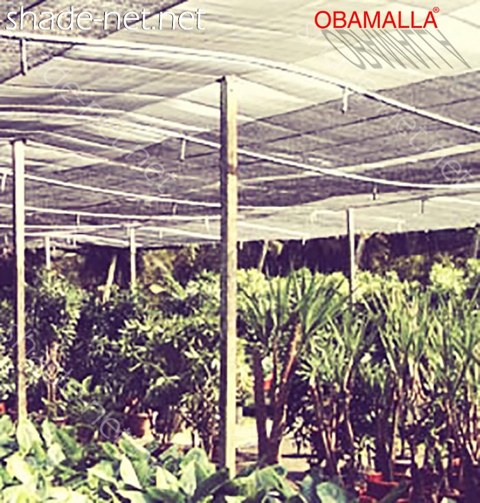 crops protected them for the raschel mesh obamalla.