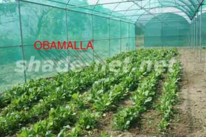 crops protected with shadehouse
